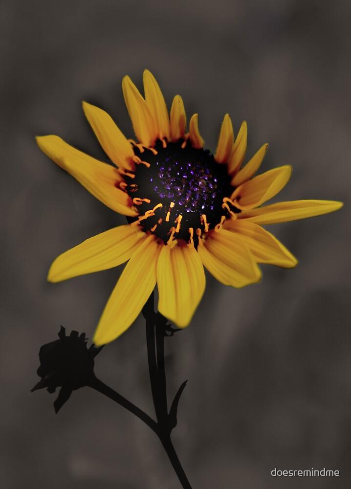 Flower by doesremindme