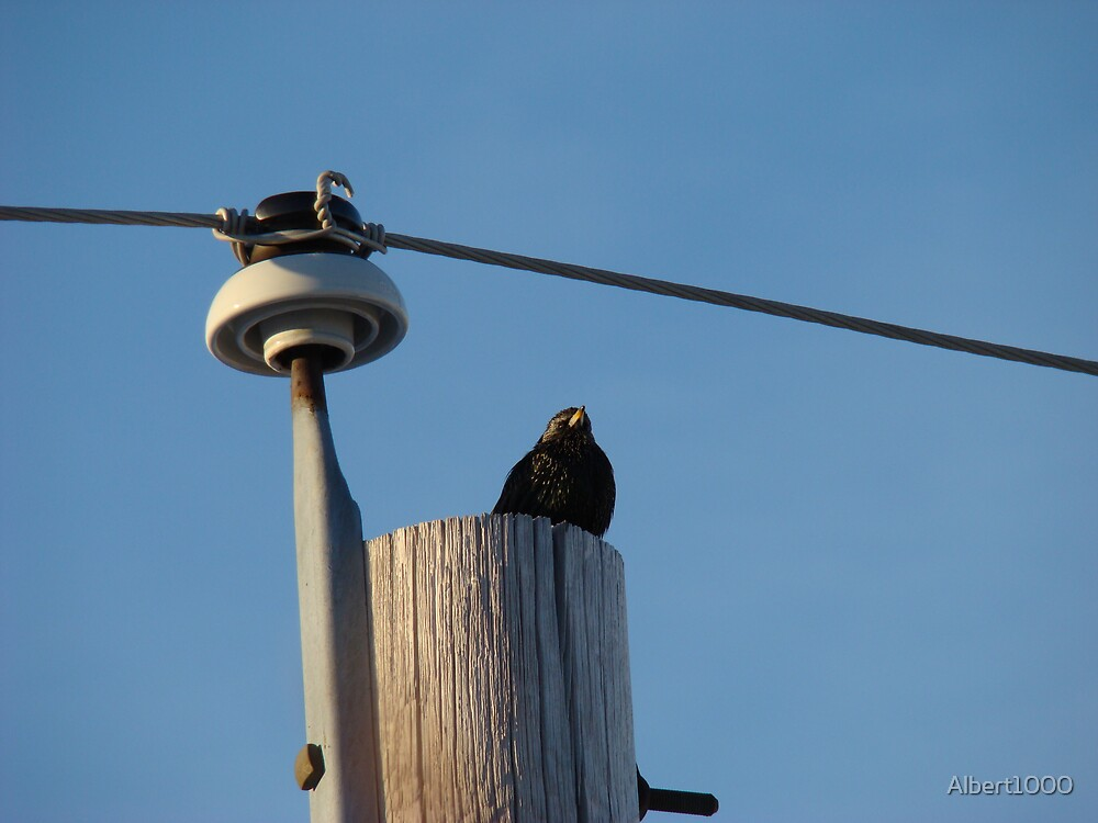 My winter bird #2 by Albert1000