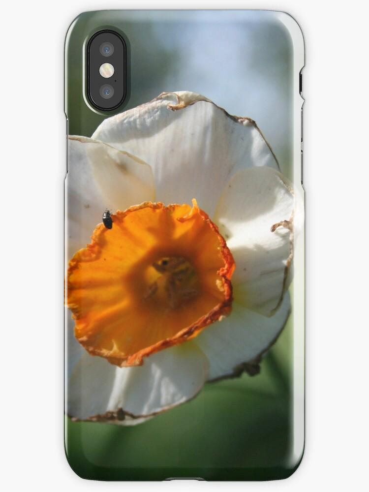Daffodil by ellaharriott