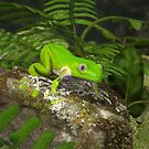 Giant Monkey Frog by Ken Gilliland