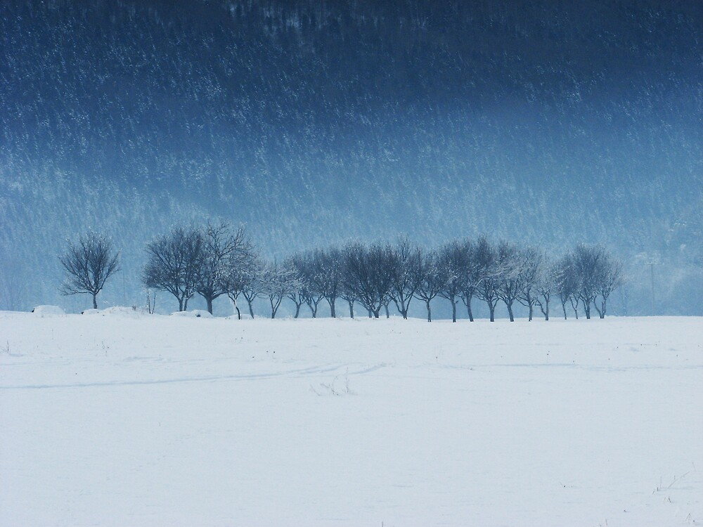 Trees in the snow by jerincsson