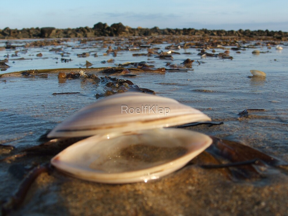 Shell on beach by RoelfKlap
