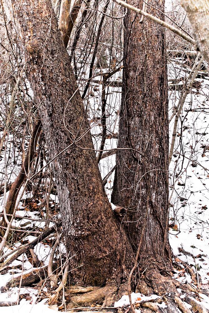 Winter Walk #2 by Rod  Adams