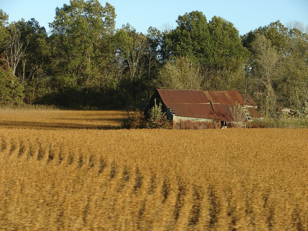 Amber Waves of Grain by inventor