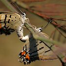 caterpillar to butterflys by craignoble