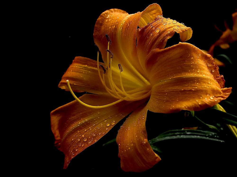 Flower by David James