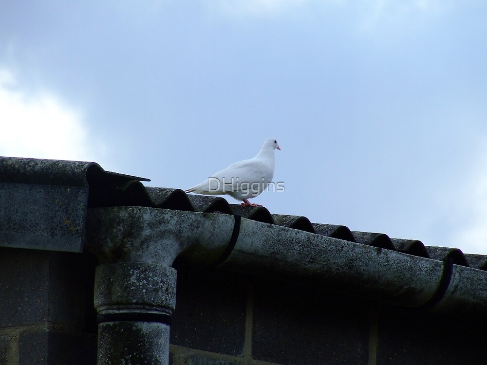 Dove 2 by DHiggins