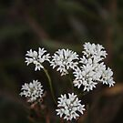 white fowers  by veins