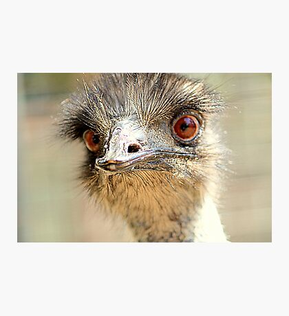 Yes... It Is I  Emu Photographic Print