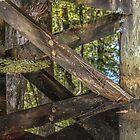 Reflection by John  Kapusta
