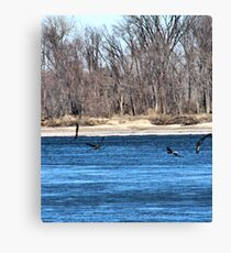 Eagles Feeding Canvas Print