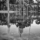Lake Reflections - B&W by Nuno Pires