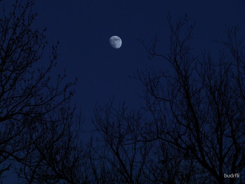 winter moon by budrfli