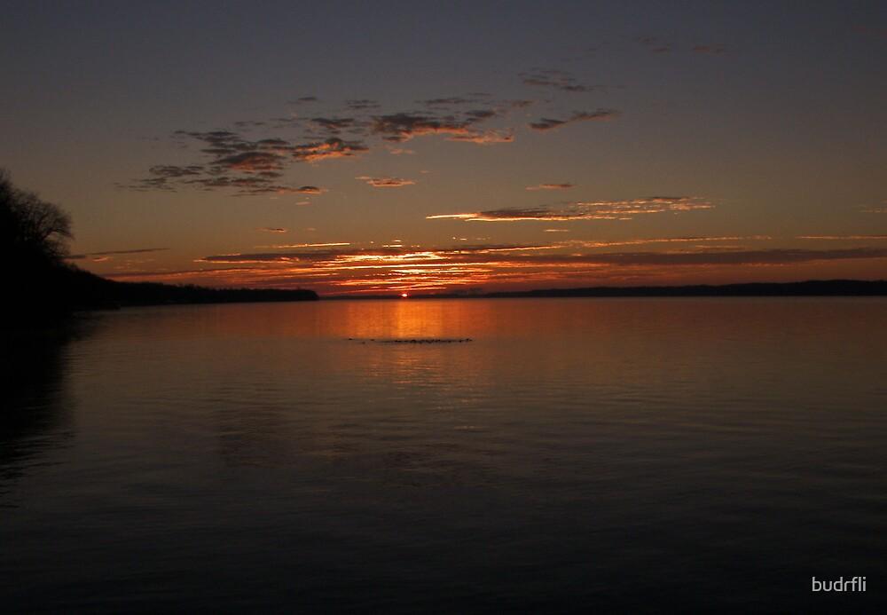 risen morning by budrfli