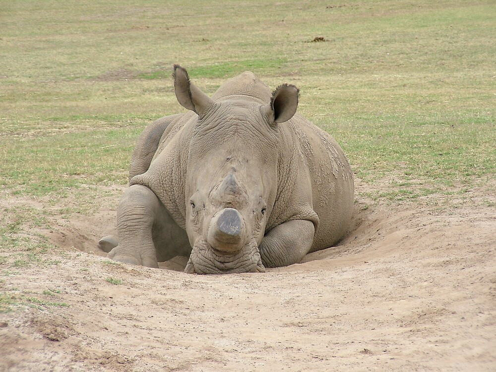 rhino by katejones