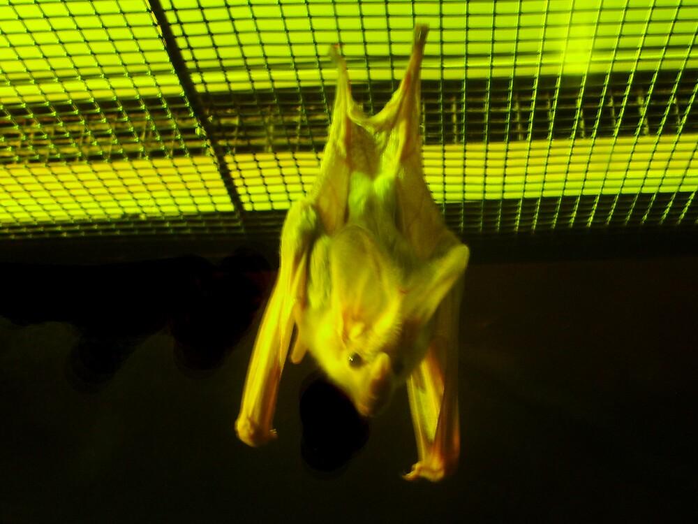 Gone Batty by Gozza