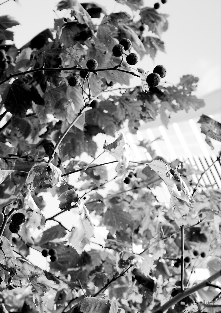 Shot of Leaves with Eureka Tower in the Background by xadium