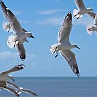 Hovering seagulls  by Margaret Stanton