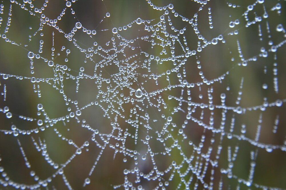 Spider Web by Lisa Supple