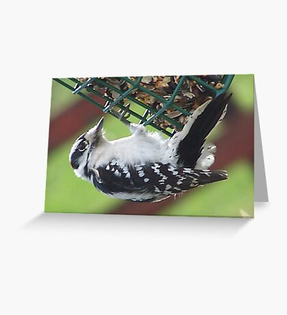 Just Hang On! Greeting Card