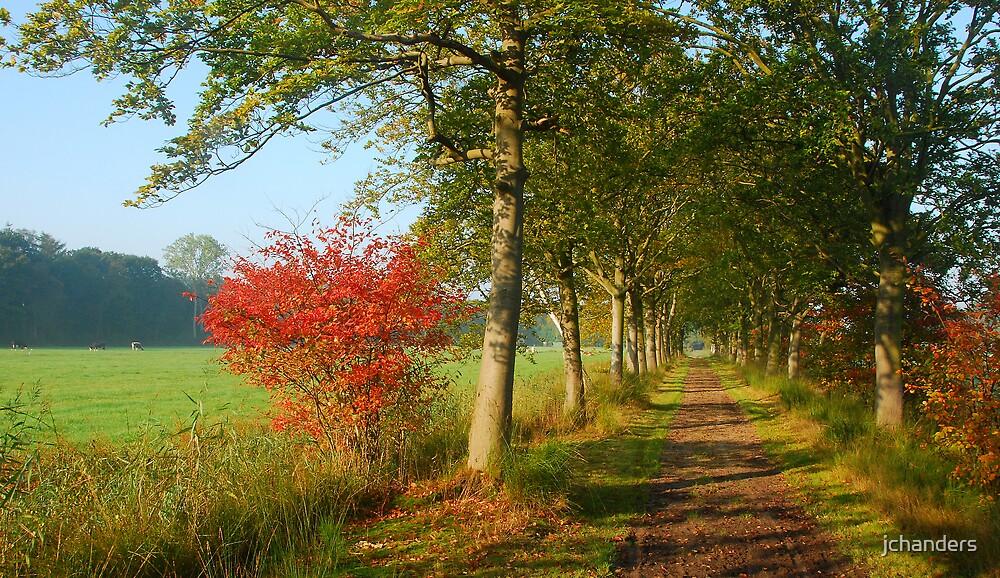The red bush walk by jchanders