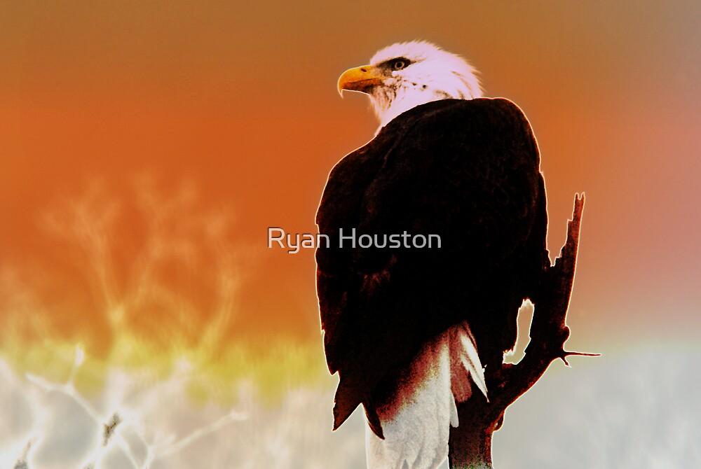 Bald Eagle by Ryan Houston