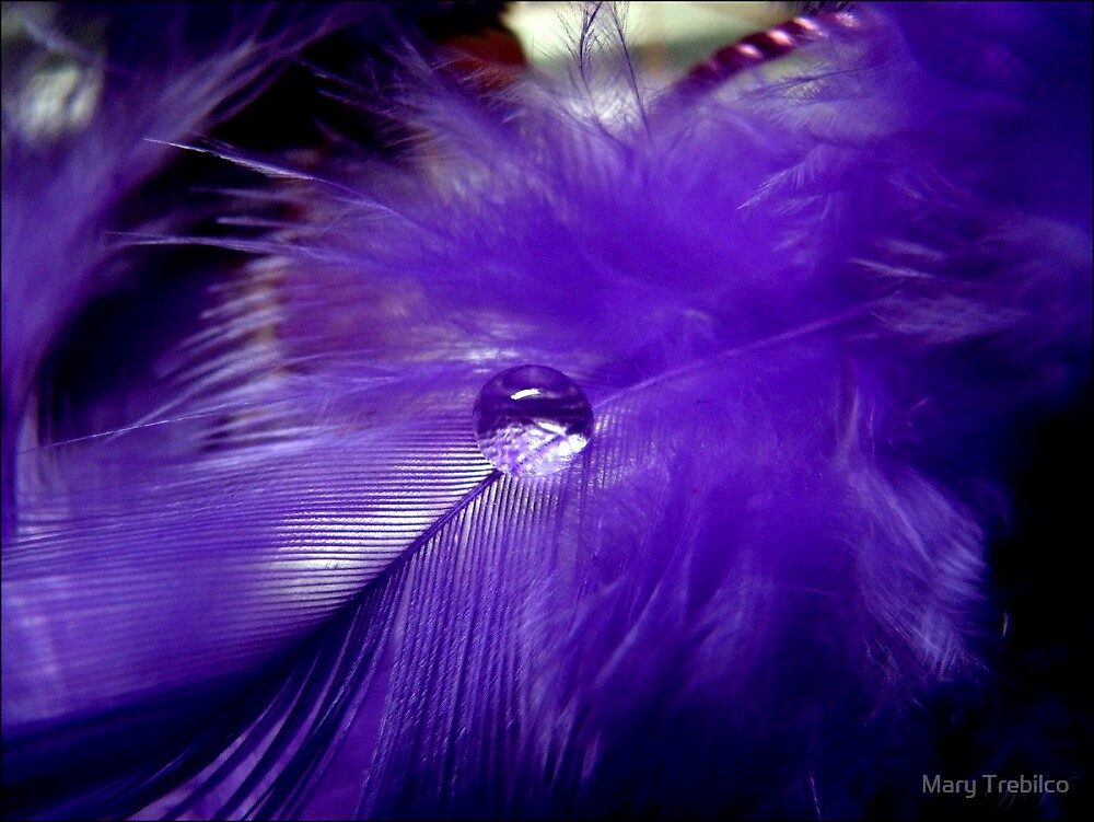 Dropped on purple... by Mary Trebilco