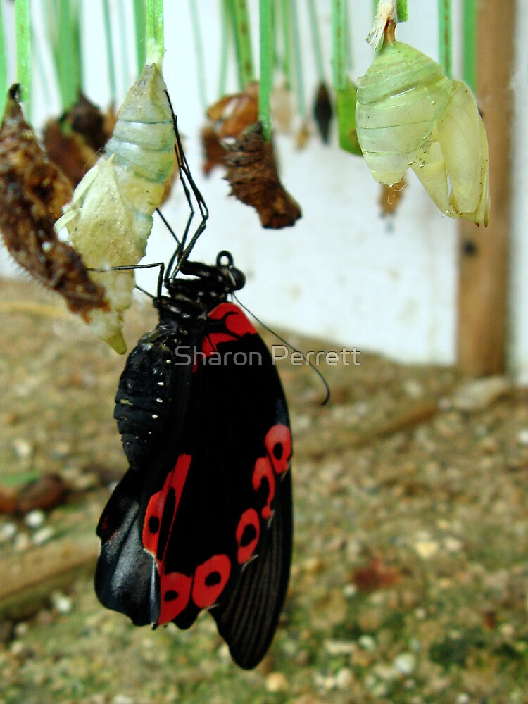 Hanging out to dry by Sharon Perrett