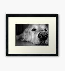 Baxter Framed Print