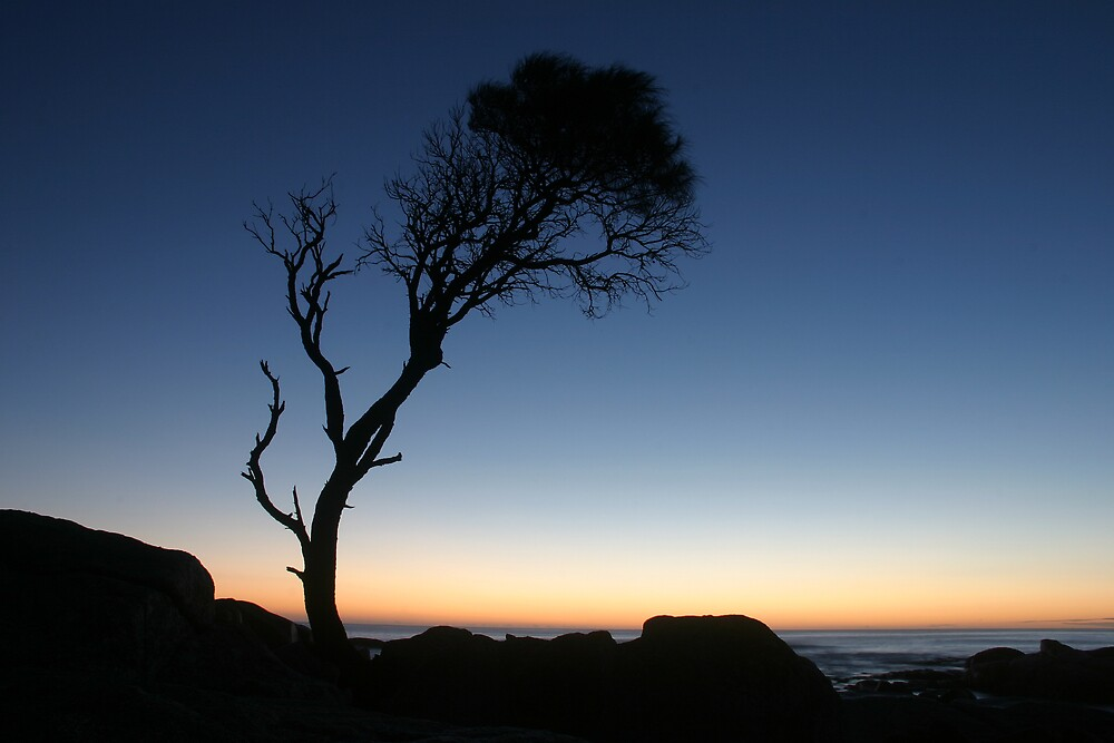 Binnalong Tree by Ian Robertson