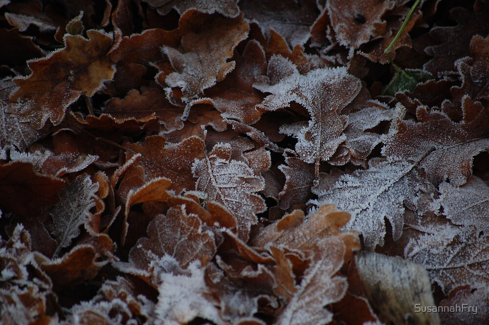 Frosted Oak Leaves by SusannahFry