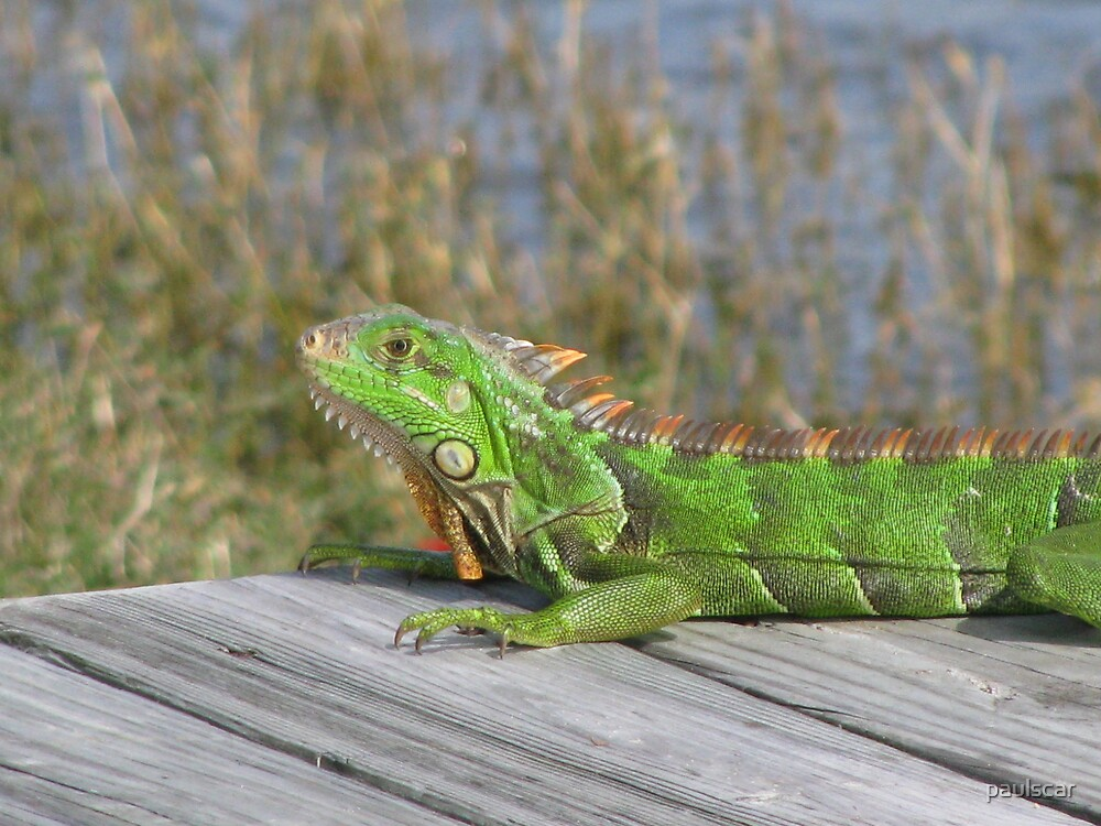 shades of green by paulscar