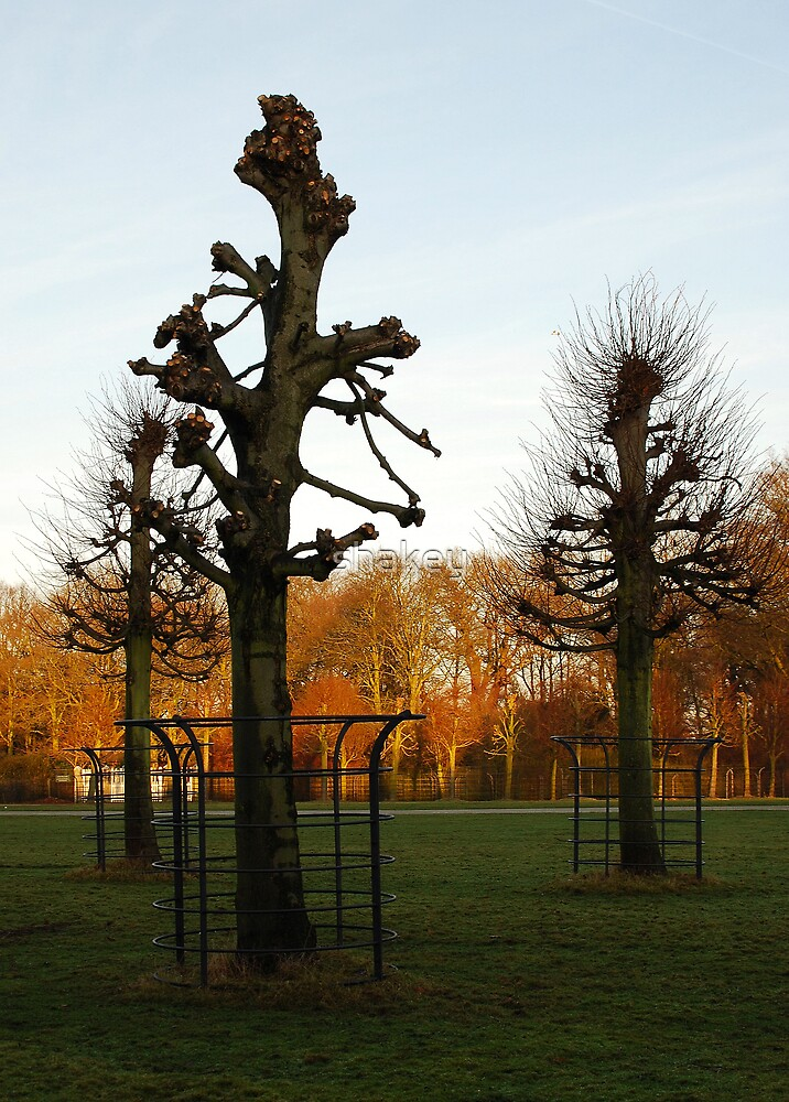 Caged trees by shakey