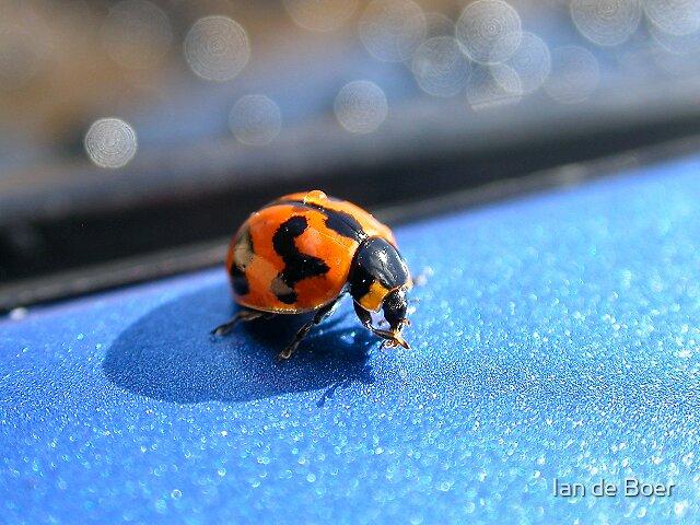 Washing Ladybird by Ian de Boer
