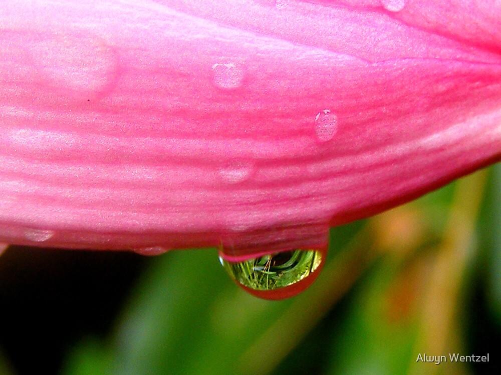 Pink Water by Alwyn Wentzel