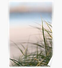 Grass on Sand Dunes Poster