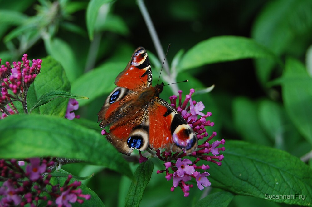 Peacock on Butterfly Bush by SusannahFry