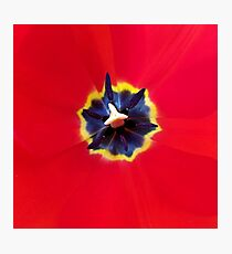 Seeing red (at tulip time) Photographic Print