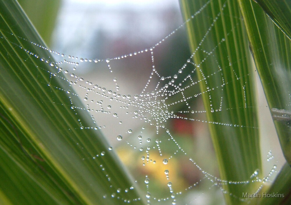 wet web by Martin Hoskins