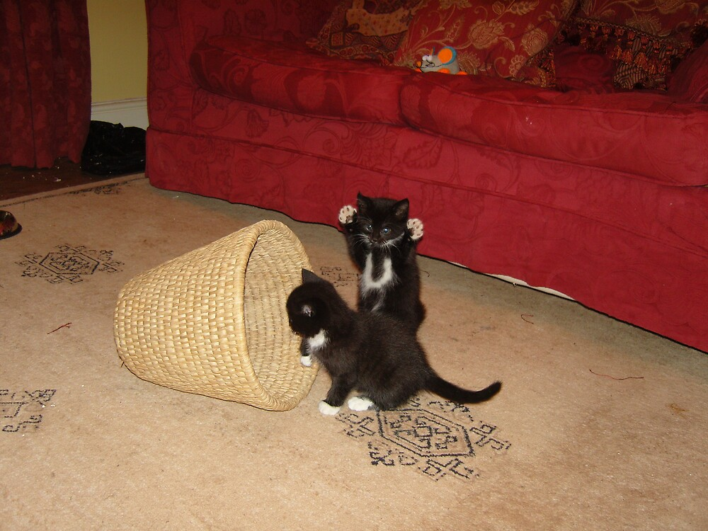kittens playing by jeanmarie