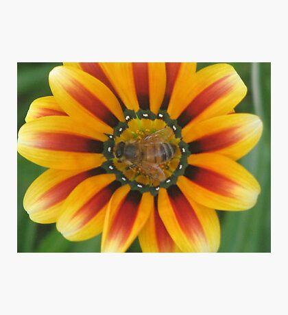 Bee Happy ! Photographic Print