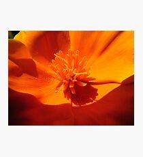 california Poppy Photographic Print