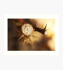 Thorns - Extreme Closeup Art Print