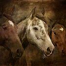 Wild Horses by WickedLola