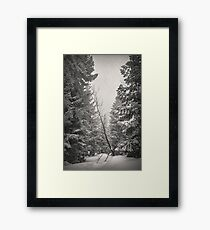 Nature Fairy Tails Framed Print