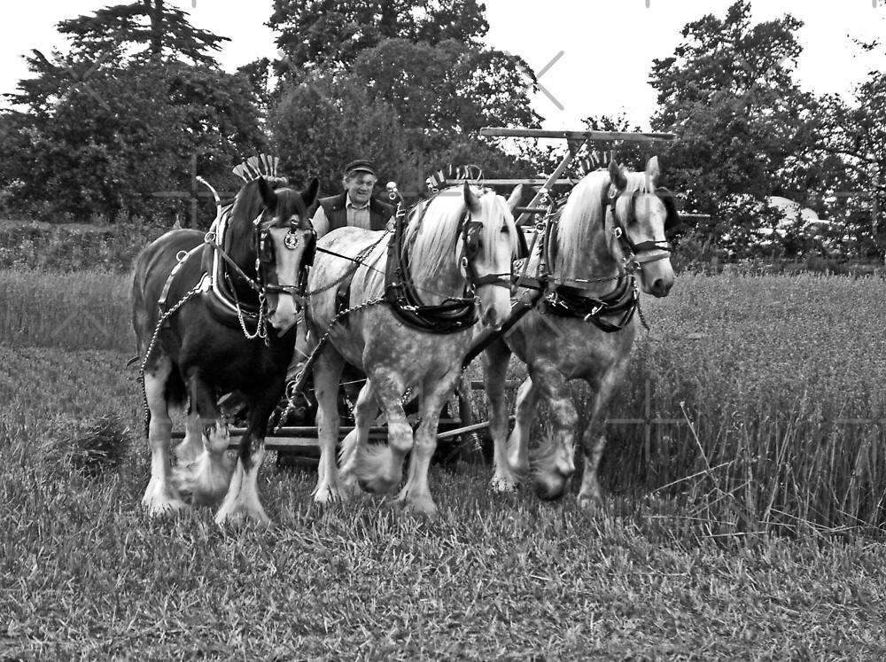 Three Horse Power by Yampimon