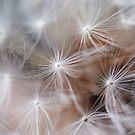 The softness of a Dandylion by the57man