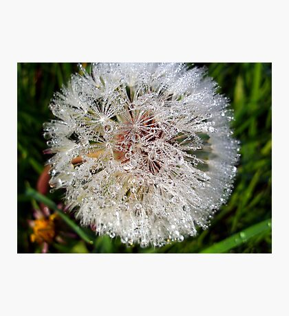 Dew Soaked Dandelion Photographic Print