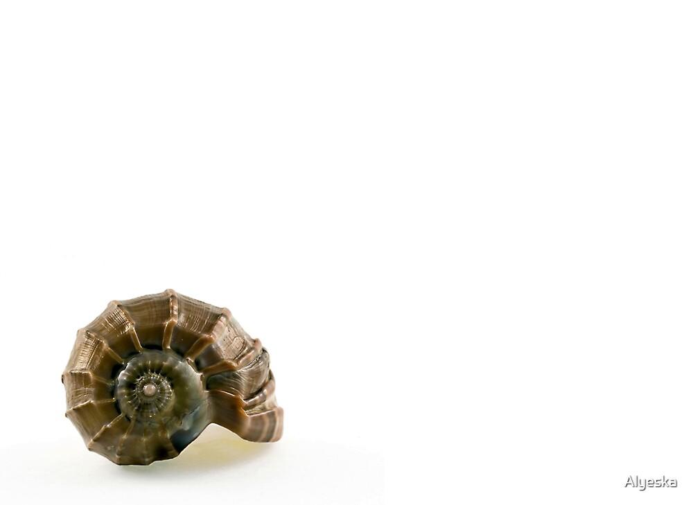 Shell by Alyeska