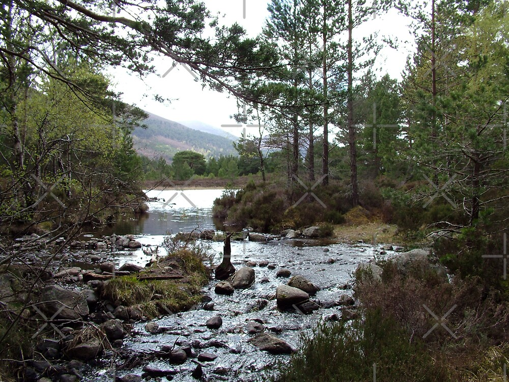 Stream running out of Loch an Eilean by Tom Gomez